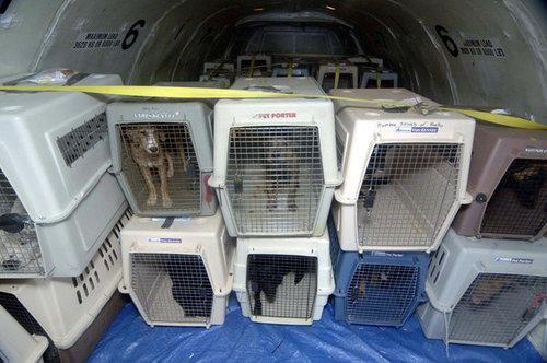 Larangan Sementara Import Binatang Hidup dari RRT